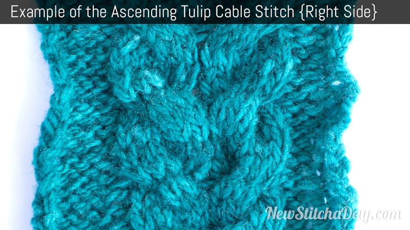 Example of the Ascending Tulip Cable Stitch. (Right Side)
